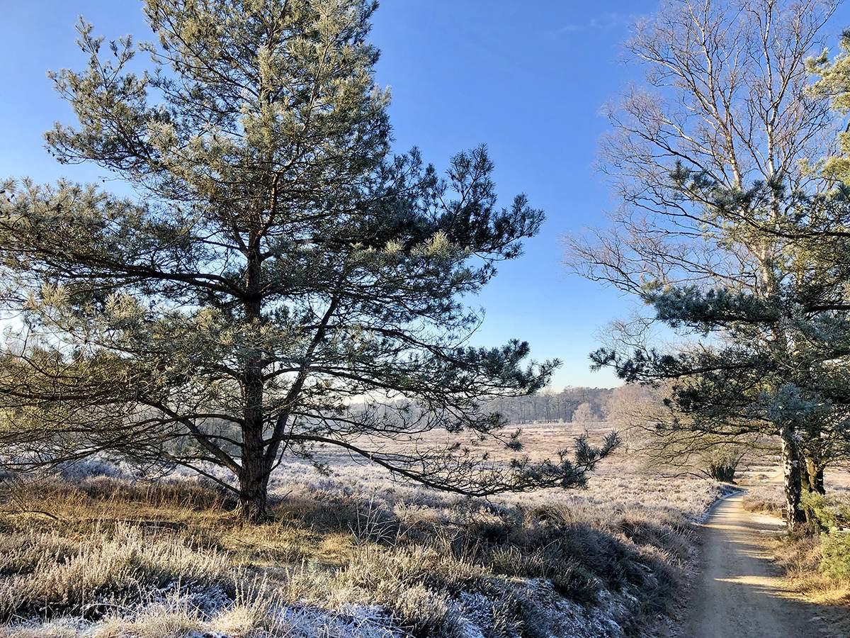 winterse wandelingen op de veluwe