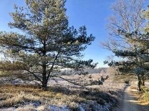De mooiste winterse wandelingen op de Veluwe