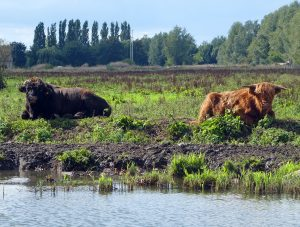 Things to do in Medemblik, The Netherlands