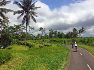 Bike tour Ubud: cycling through Bali's rice fields