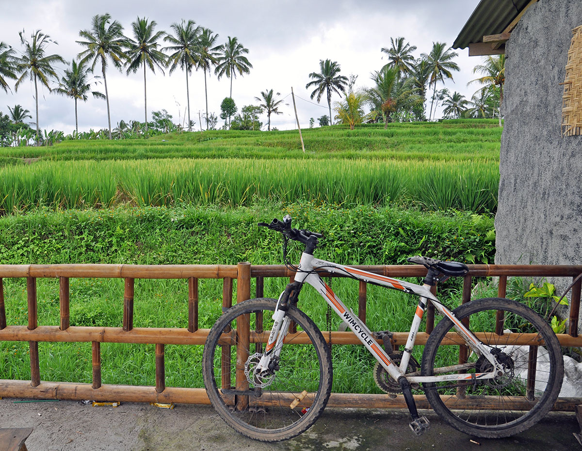 rijstvelden bij Pupuan