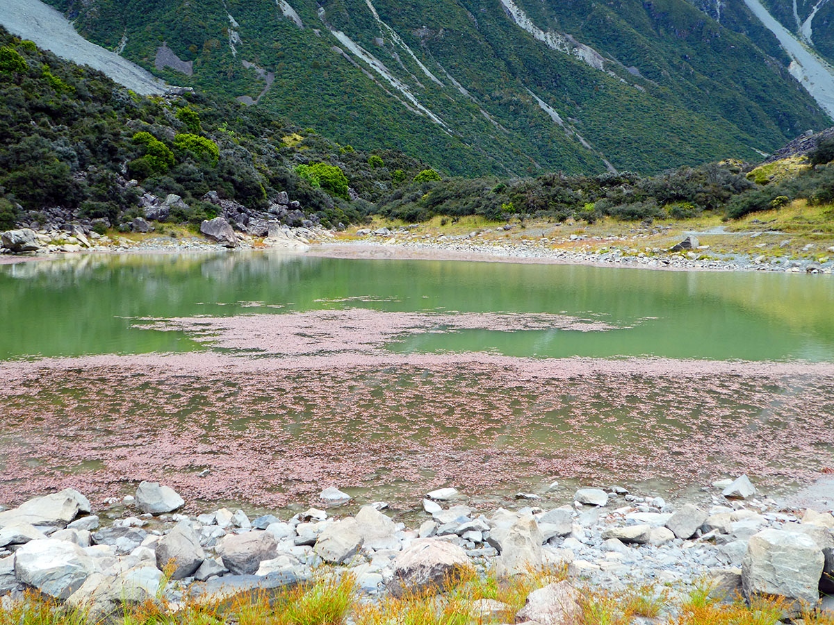 best hikes in mt cook walks