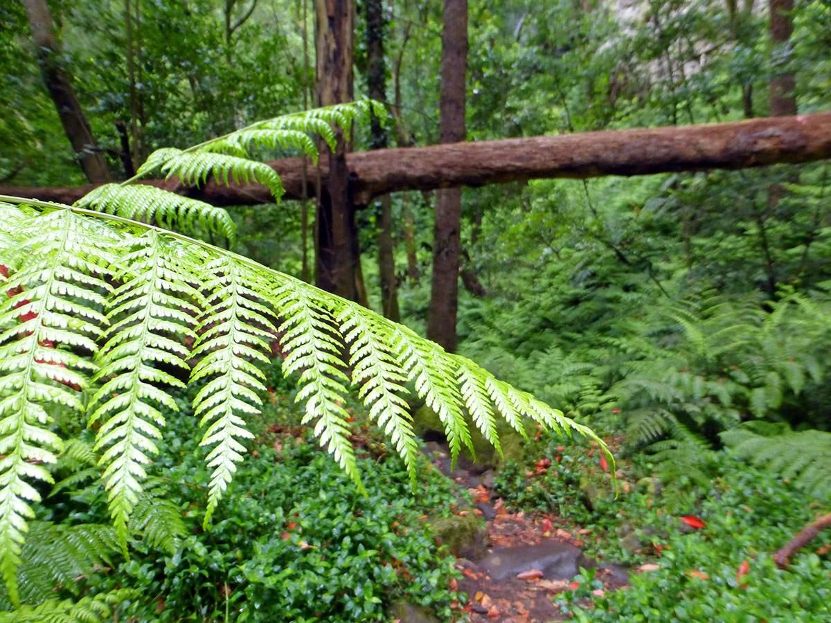Groene kant van La Palma wandelen