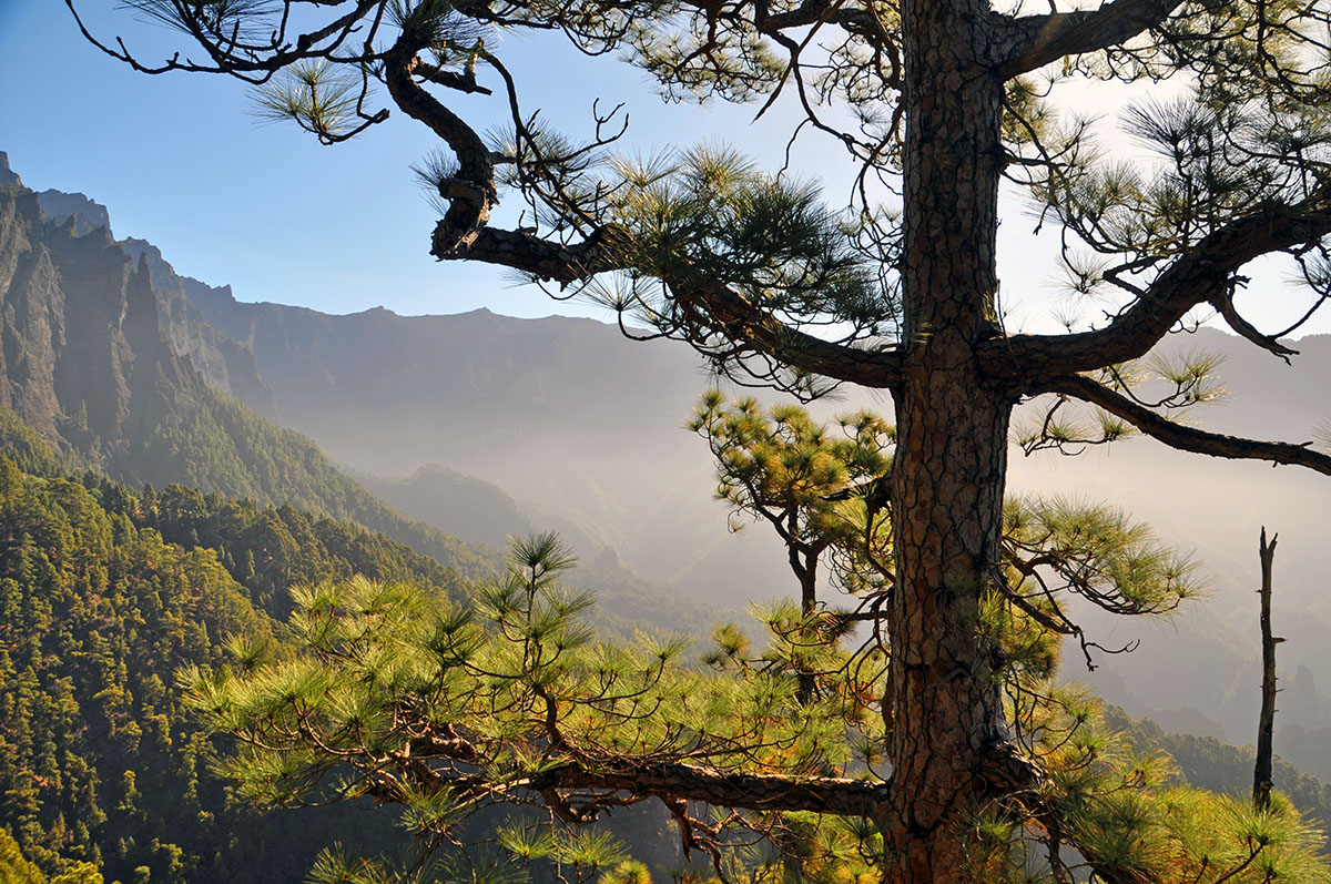 Los Brecitos wandelen op La Palma wandelroutes