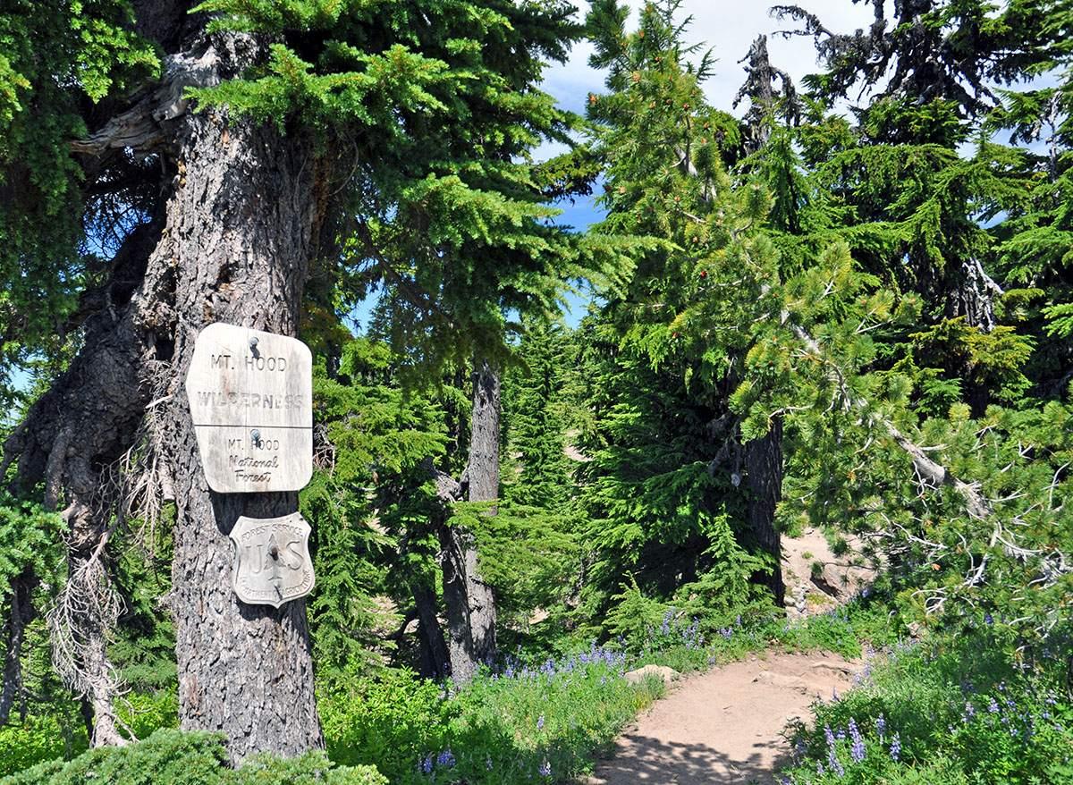 Pacific Crest Trail Oregon