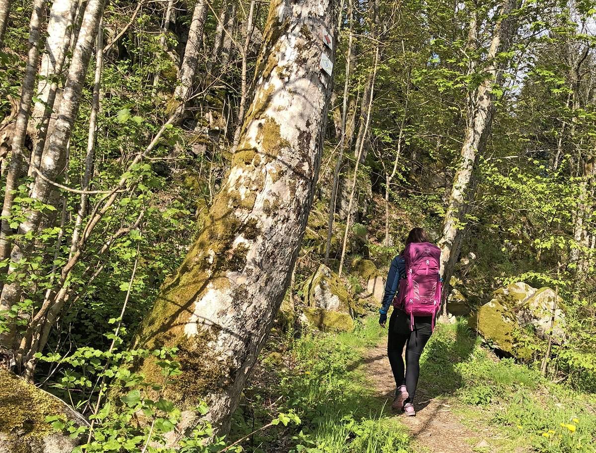 wandelen zwarte woud
