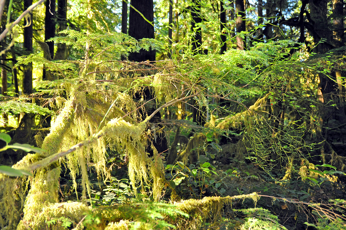 Rain Forest Olympic National Park