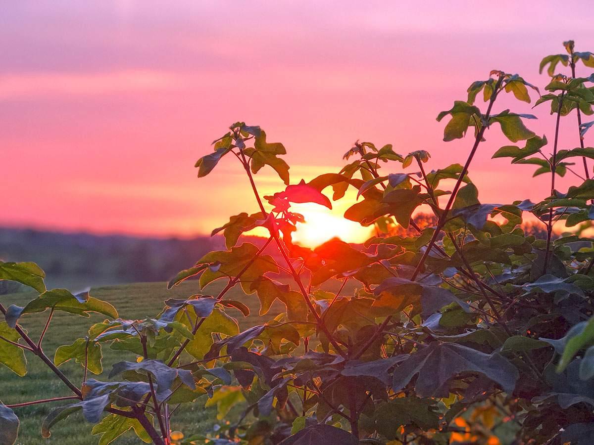 Zonsondergang vanuit onze woning in Landal Hoog Vaals