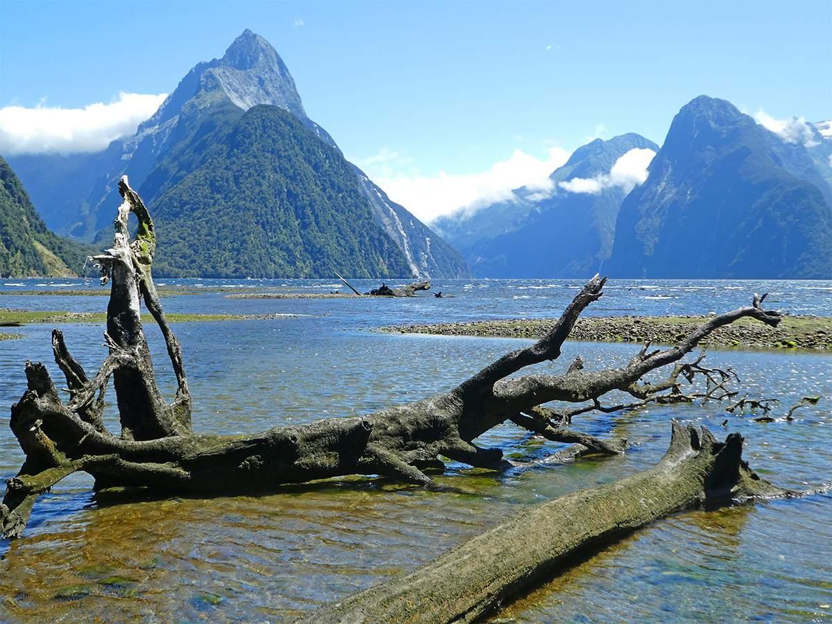 Milford Sound walks