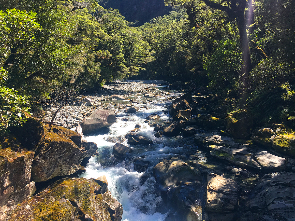 The Chasm walk Fiordland National Park