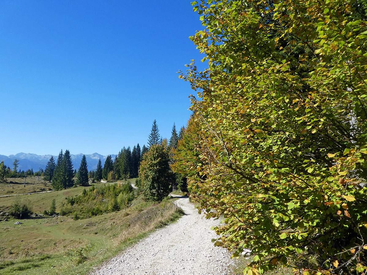 Wandelen op het Pokljuka Plateau hiking in Triglav