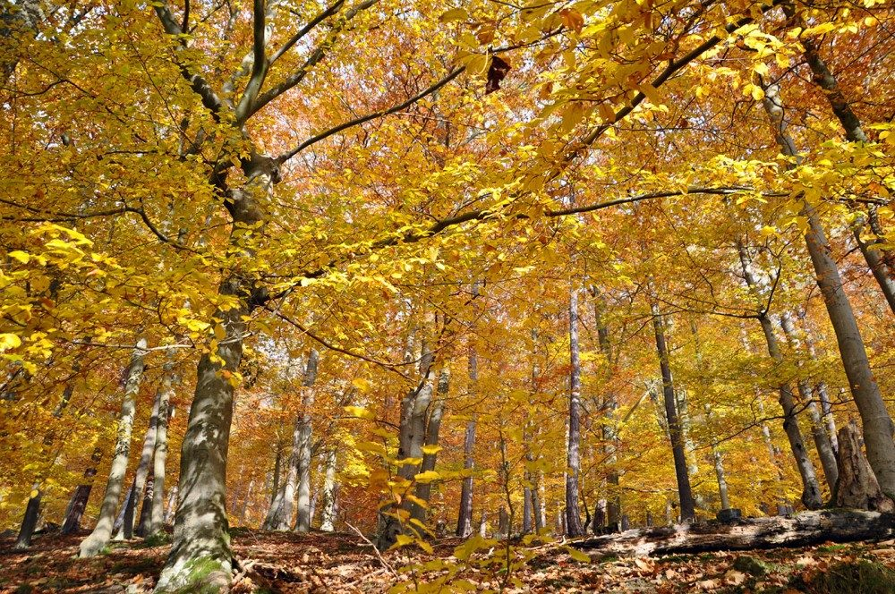 Kellerwald in de herfst