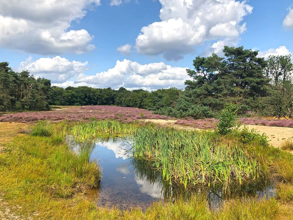 Heidewandeling Warnsborn op de Veluwe