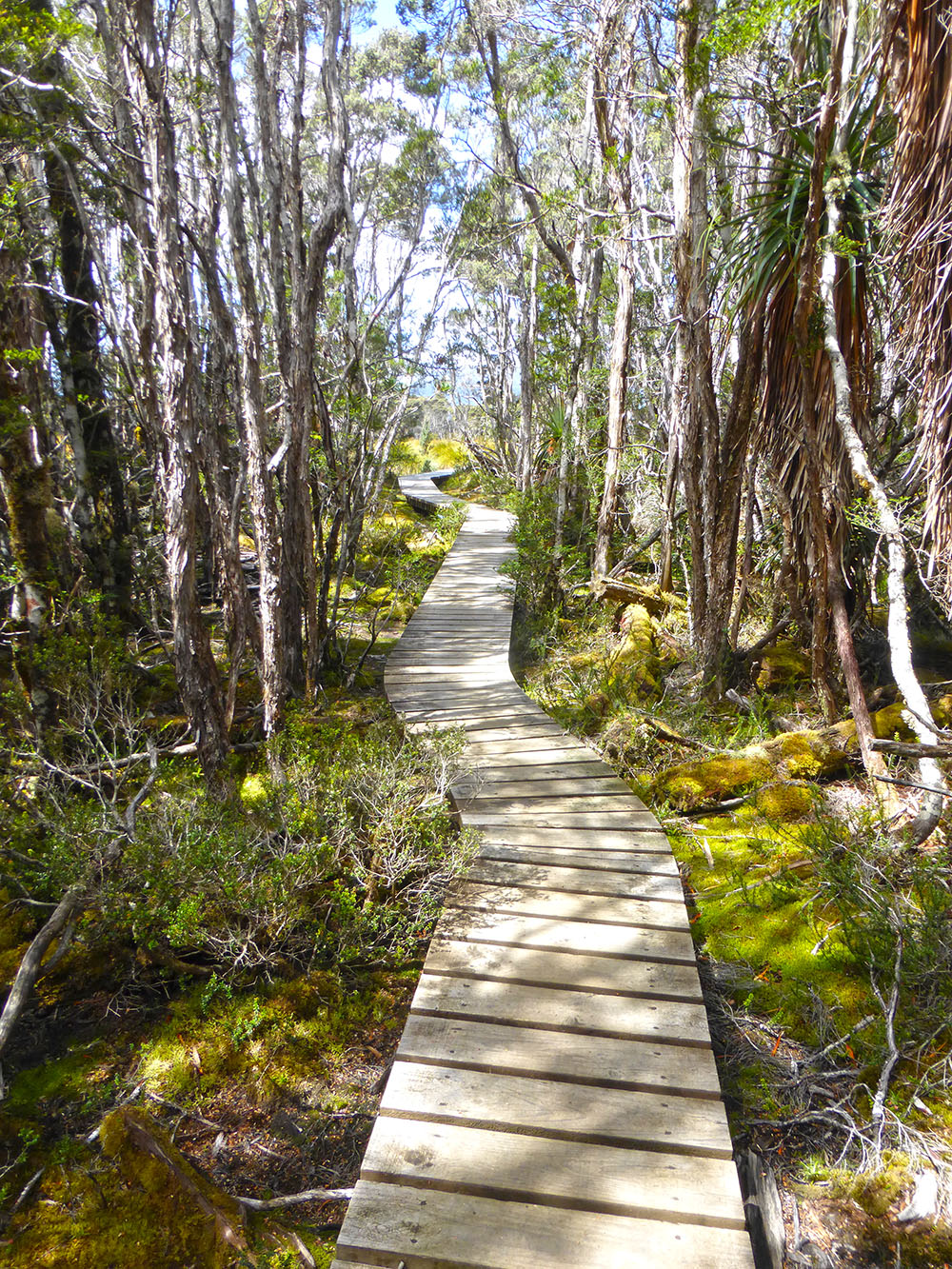 boardwalk on the Overland Track