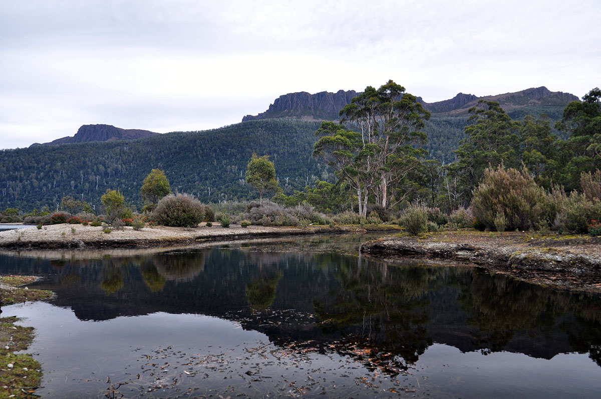 Narcissus Overland Track