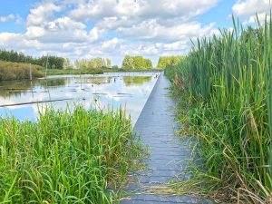 Wandeling bij de Nieuwe Hollandse Waterlinie: Rondje Linielanding