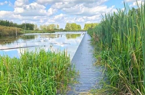 Verdronken bos Wandeling bij de Nieuwe Hollandse Waterlinie