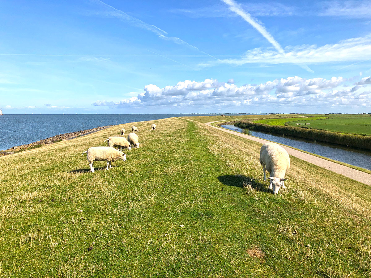 Wandelen Waterland van Friesland