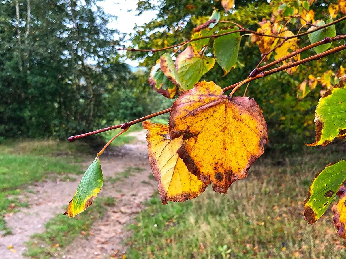 Herfst op de Laarsenberg
