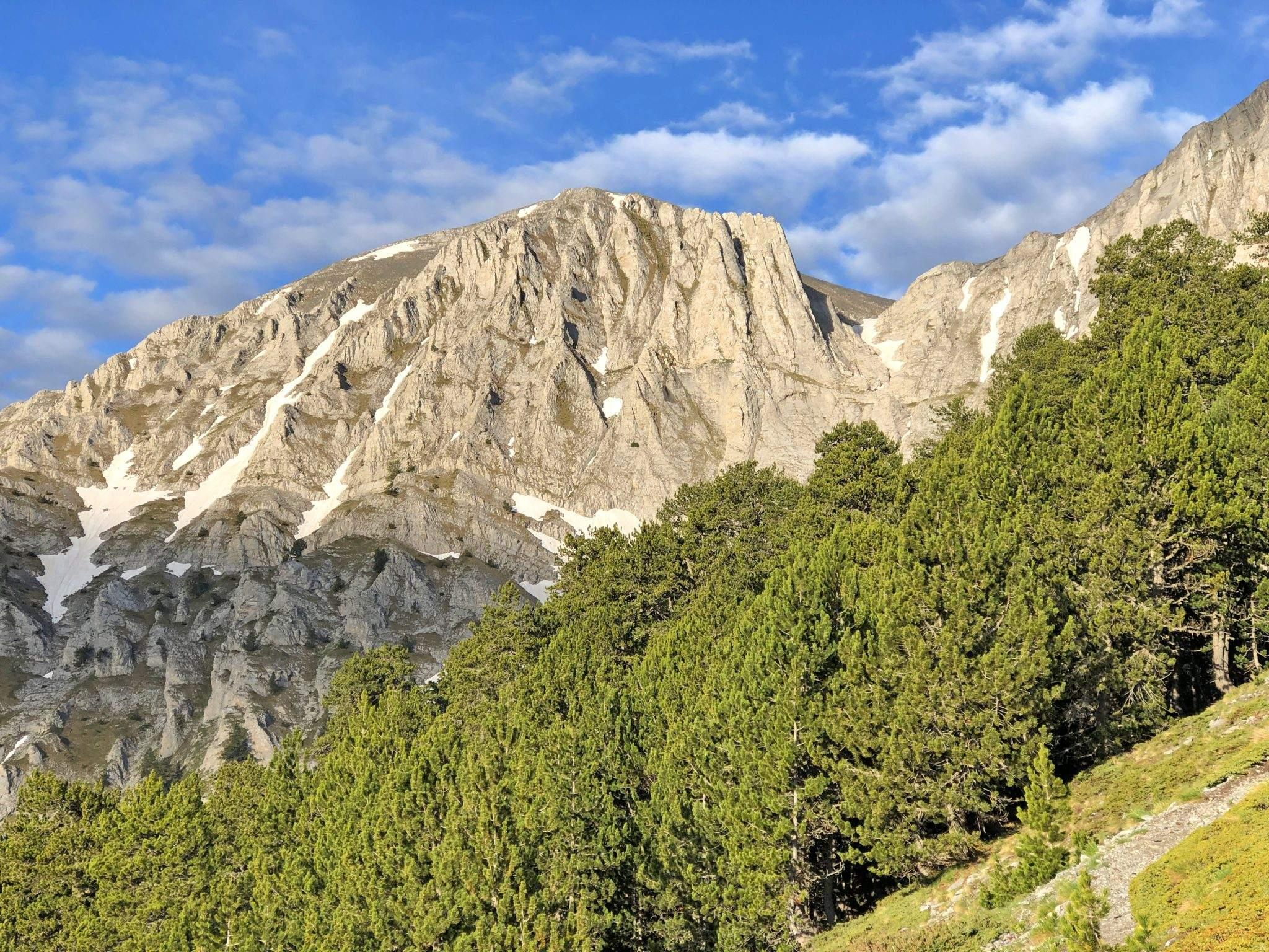 Boomgrens Mt Olympus Noord-Griekenland
