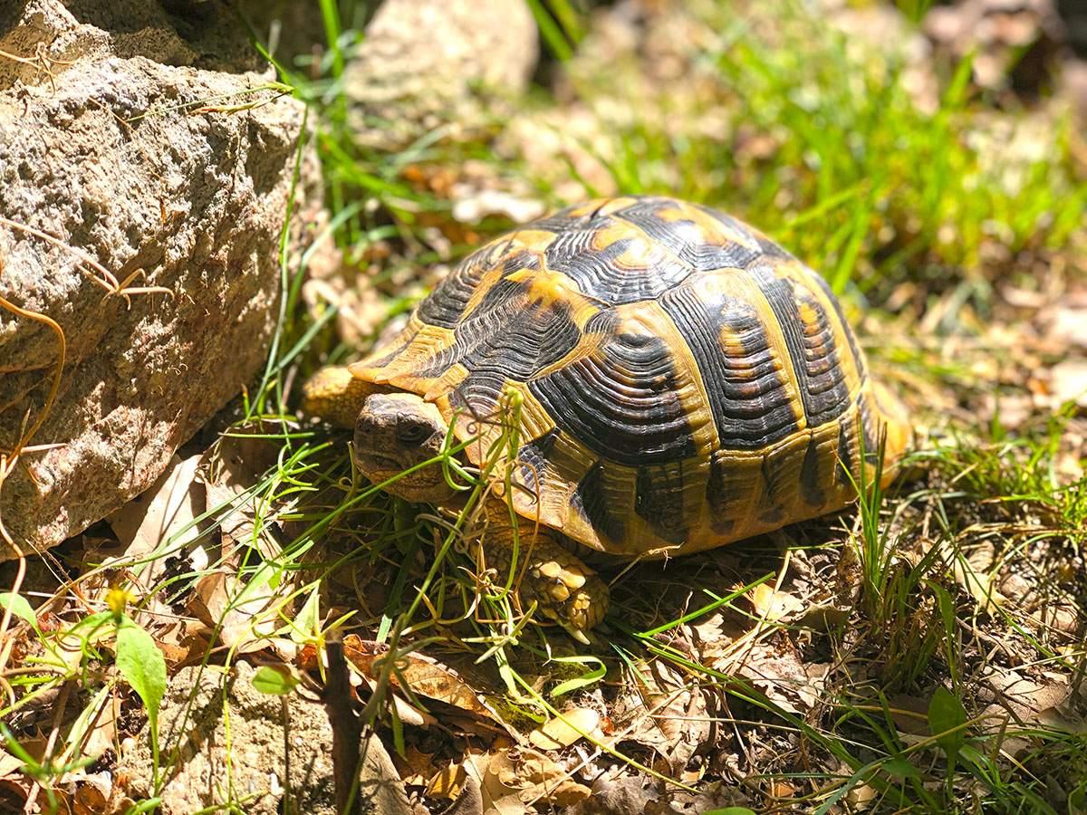 schildpad bij Meteora