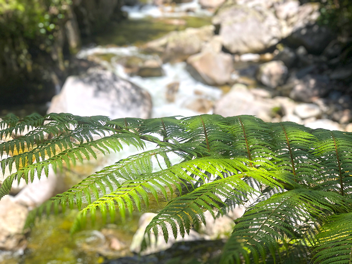 Fern on the Wainui Falls Walk