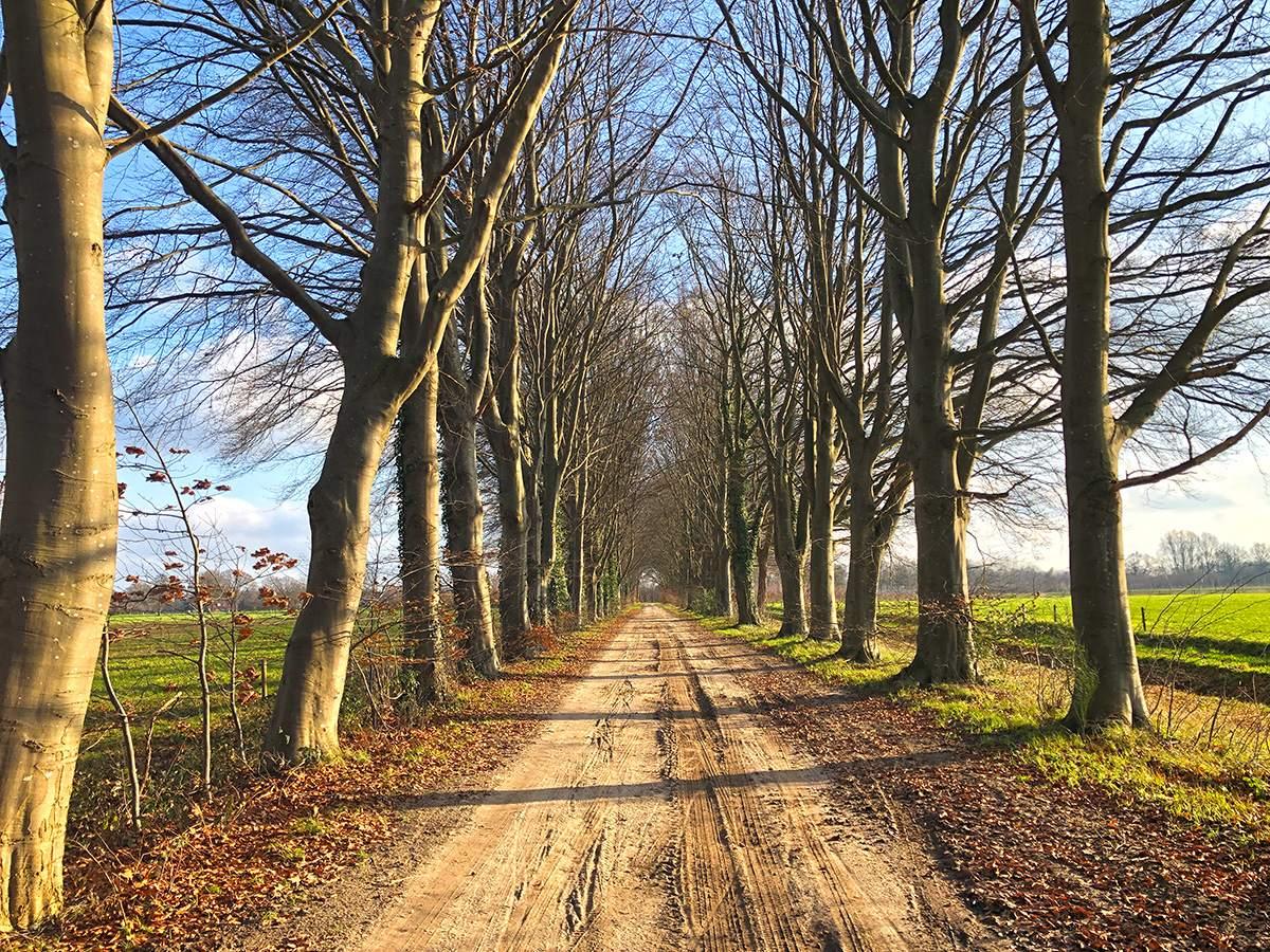 Landweg tussen Borculo en Ruurlo