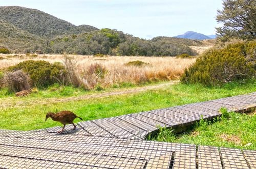 Weka near Saxon Hut