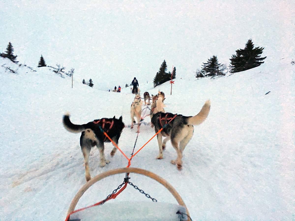 Een huskytocht in Finland