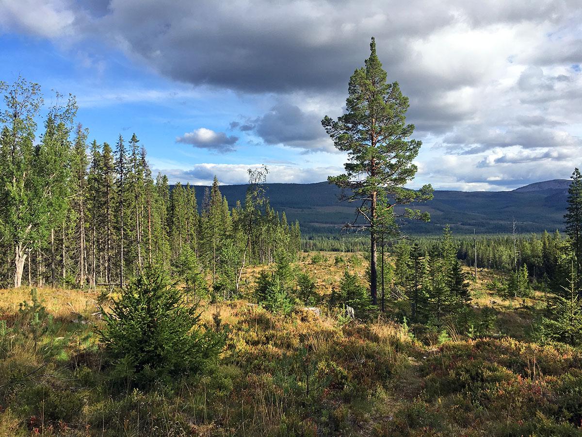 Het landschap van Härjedalen