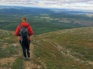 Sonfjället National Park in Zweden: bergen en beren