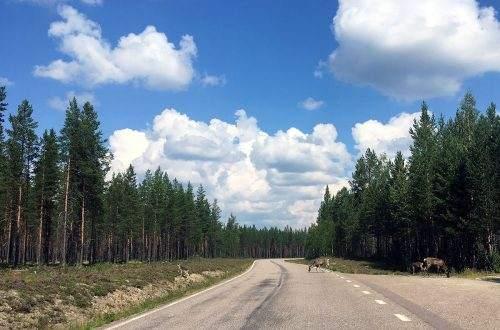 Autorijden in Zweden tussen de rendieren
