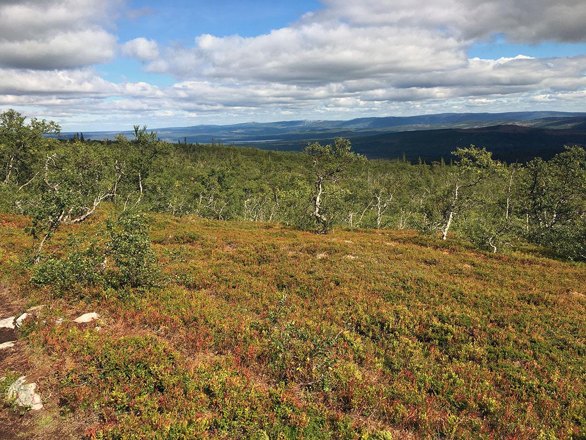 Herfstkleuren in Sonfjället National Park