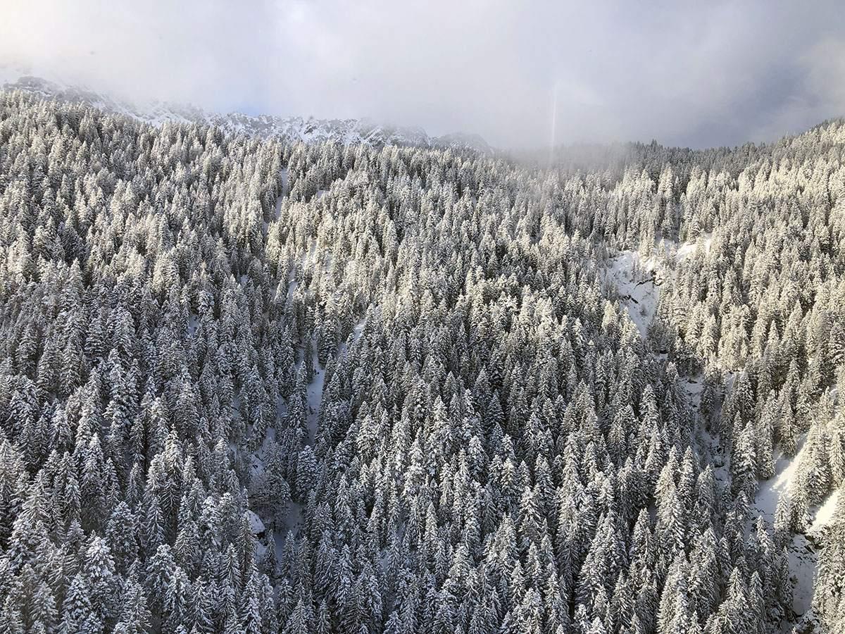 Uitzicht over de besneeuwde bomen
