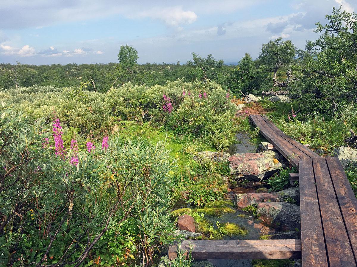 Boardwalk in Fulufjället