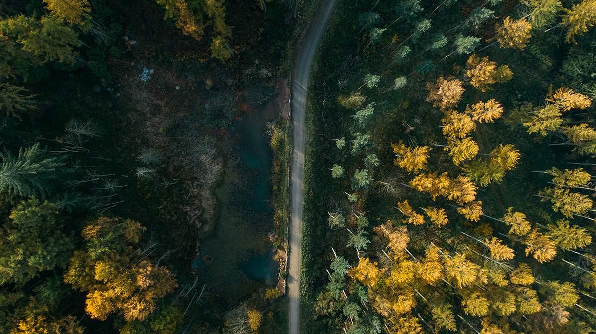 Guisborough Forest Trail 2