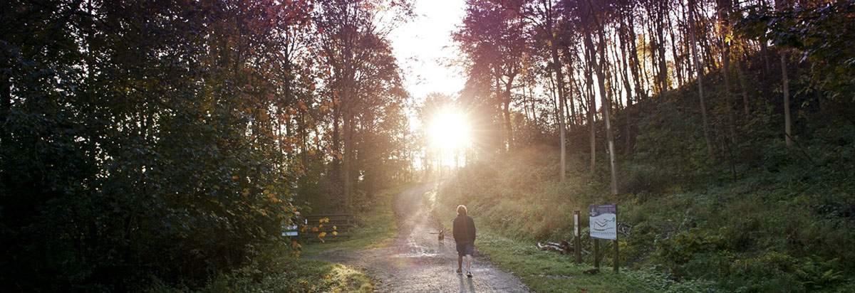 Guisborough Forest Walking Path-1750x600