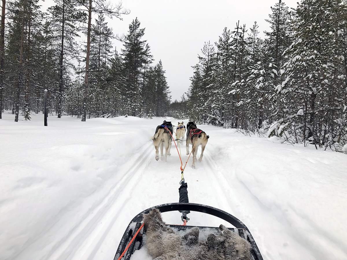 Lapland reis