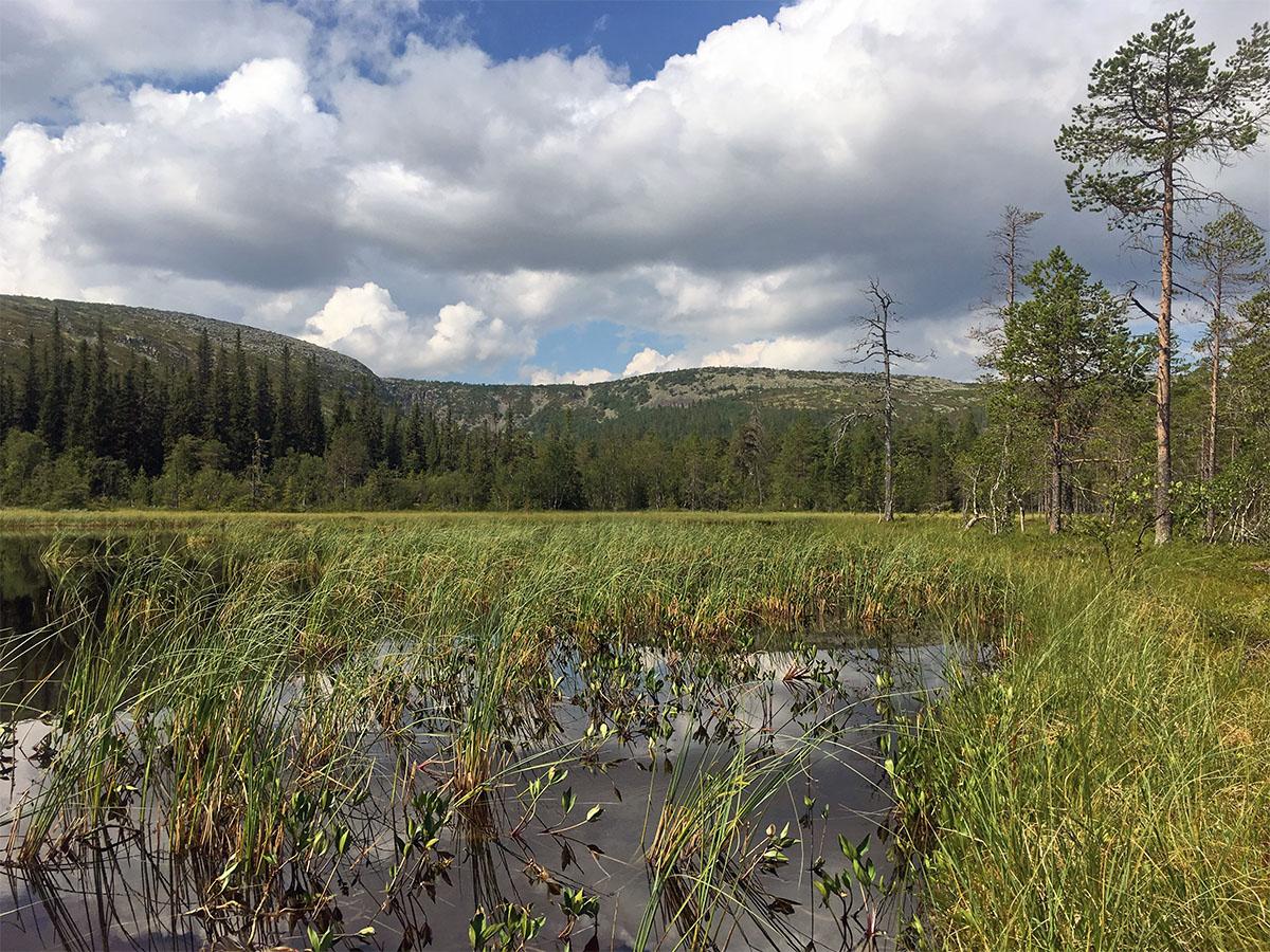 Uitzicht op Fulufjället Nationaal Park