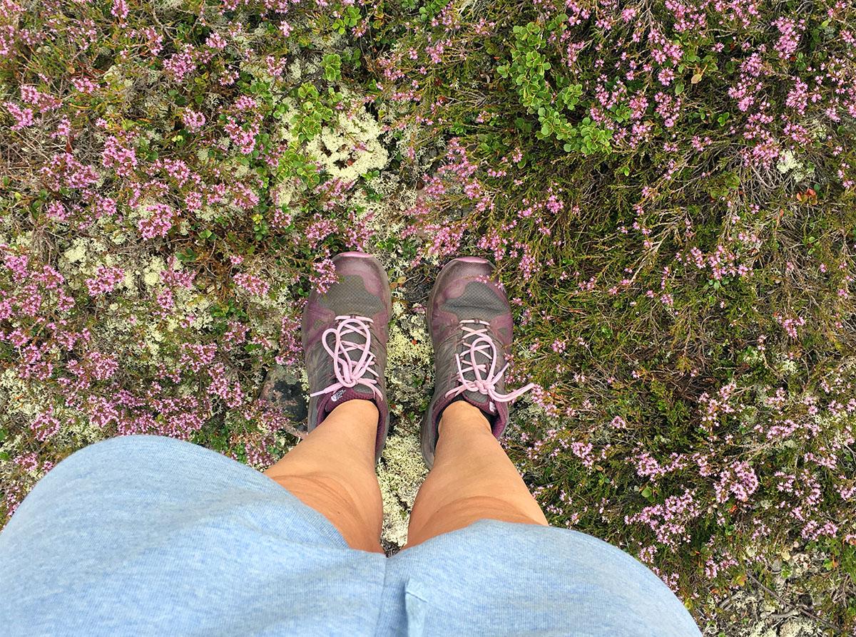 bloemen in fulufjället