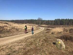 Wandelen in Loenen op de Veluwe: 3 mooie tochten