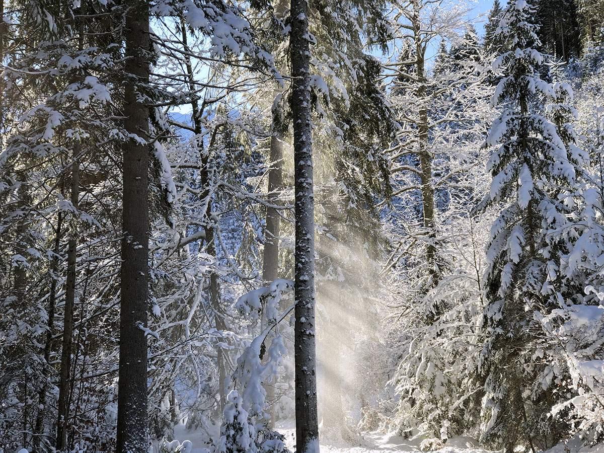 Sneeuw dat van de boom valt