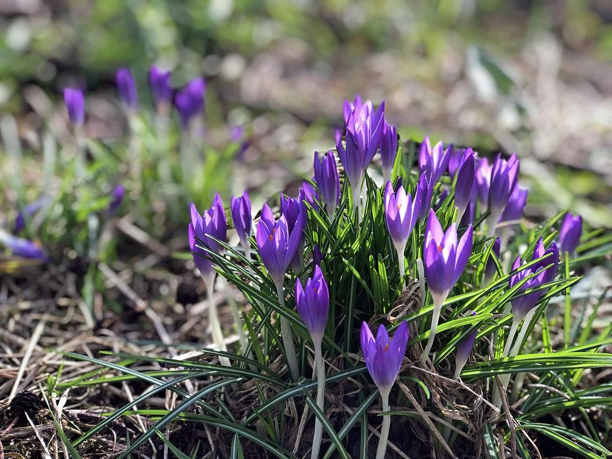 Voorjaar op het Graafschapspad