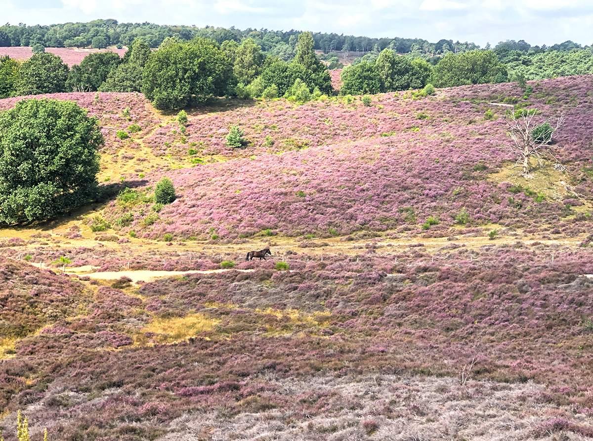 Veluwezoom Nationaal Park, één van de mooiste plekken op de Veluwe