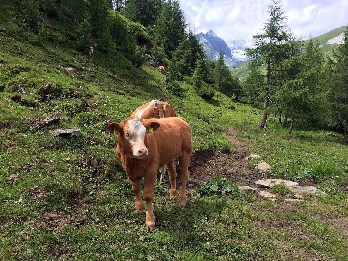 Wandelvakantie Oostenrijk