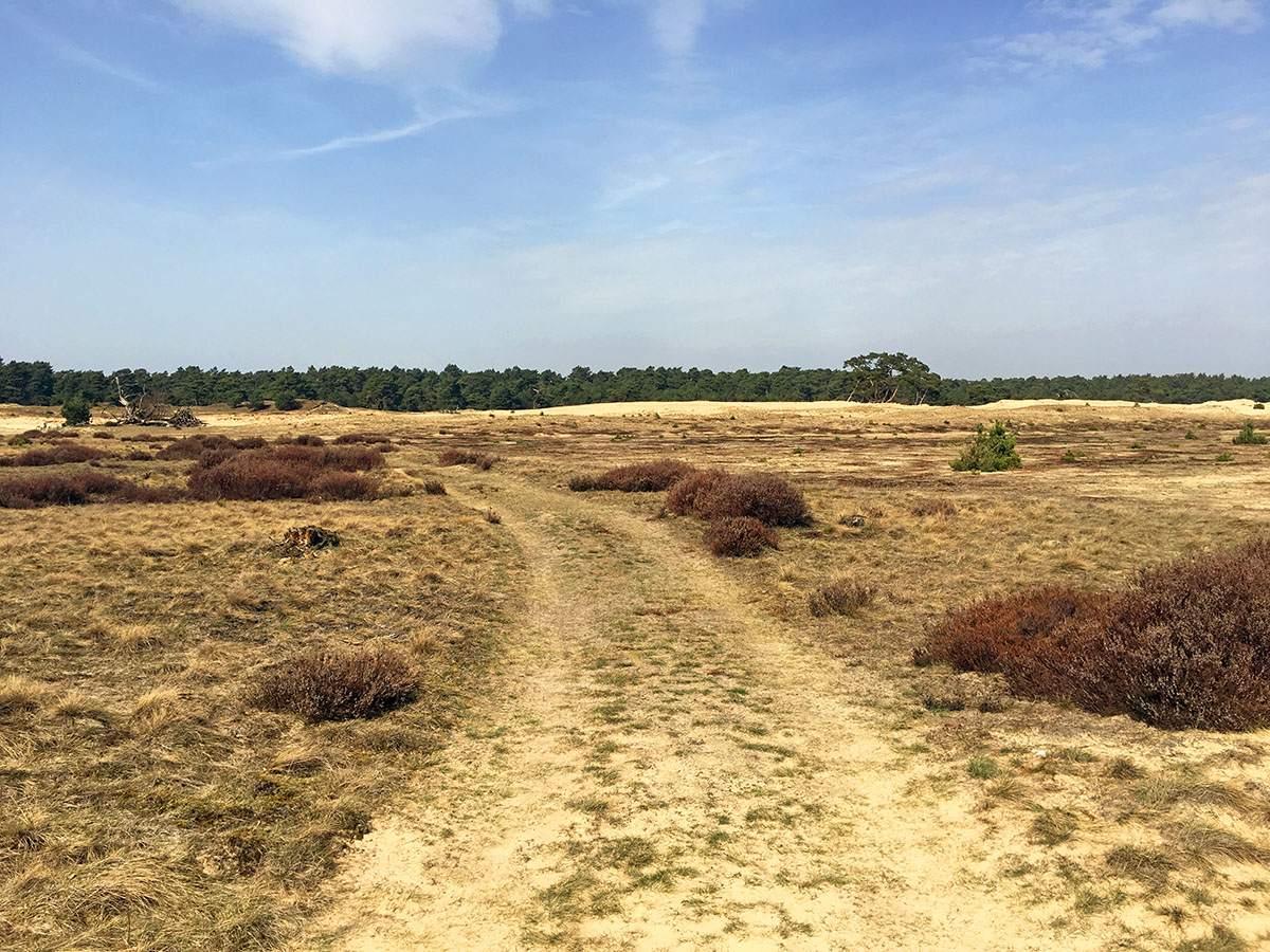 Mooiste plekken op de Veluwe: park de Hoge Veluwe