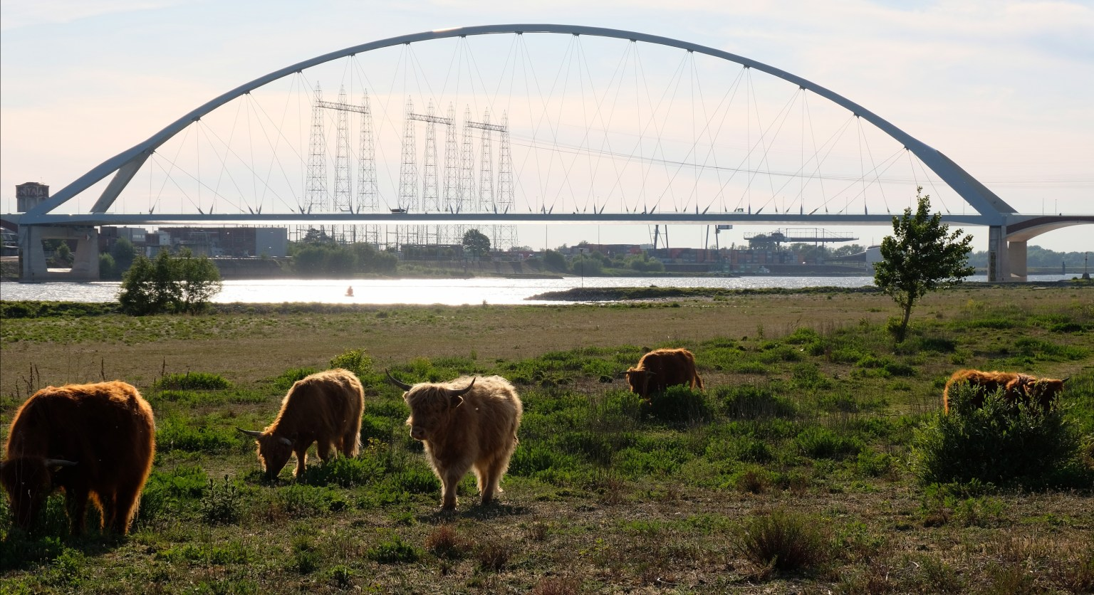 zwemmen met bisons