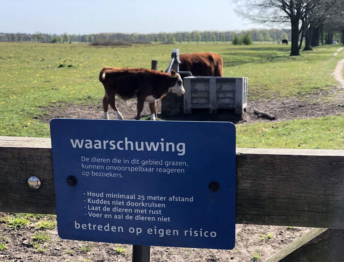Let op koeien Veluwe Zwerfpad etappe 2