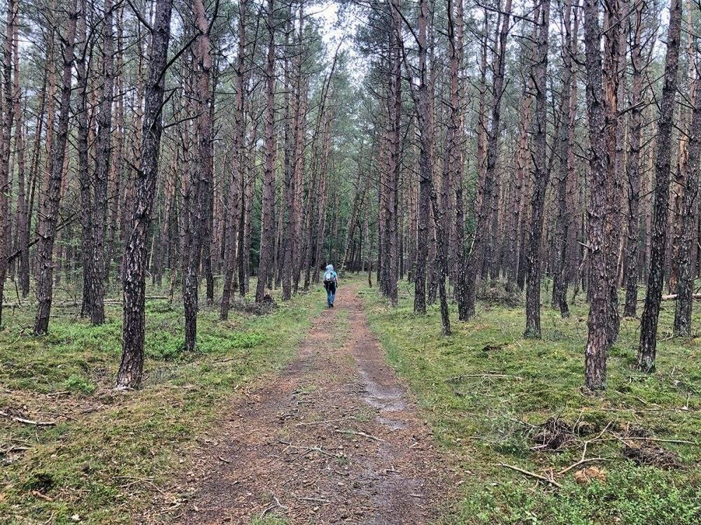 In het Leuvenumse Bos