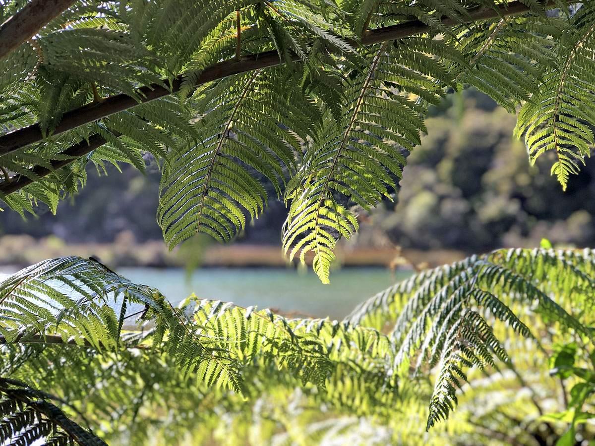Abel Tasman National Park walks